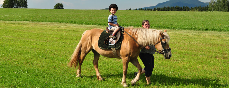 kind-pony.jpg