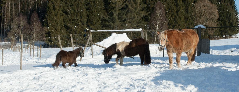 pferde-winter.jpg